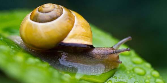 snail slime gel